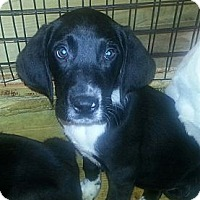 Adopt A Pet :: Joshua(ADOPTED!) - Chicago, IL