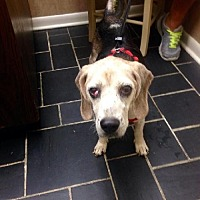 Adopt A Pet :: Blazer - Jacksonville, FL