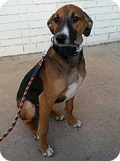 Hound (Unknown Type) Puppy for adoption in Monroe, New Jersey - Kali