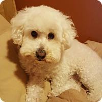 Adopt A Pet :: Luna - Algonquin, IL