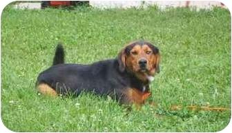 Hound (Unknown Type)/Husky Mix Dog for adoption in Austin, Minnesota - Hobbs