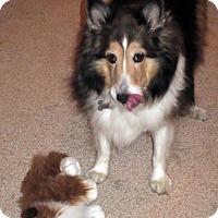 Adopt A Pet :: Tootsie - Charlottesville, VA