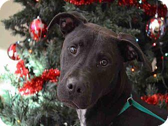 Labrador Retriever Mix Dog for adoption in Overland Park, Kansas - A076974 Duggan