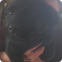 Adopt A Pet :: Switzerland - Evergreen, CO