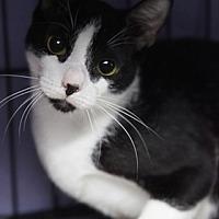 Adopt A Pet :: QB - Bronx, NY