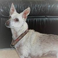 Adopt A Pet :: Grace - Dallas, TX
