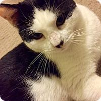 Adopt A Pet :: Puddin - St. Louis, MO