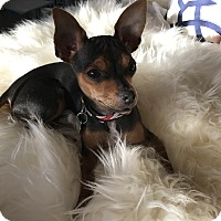 Adopt A Pet :: Joseph - San Diego, CA