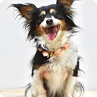 Adopt A Pet :: Maggie - Dublin, CA