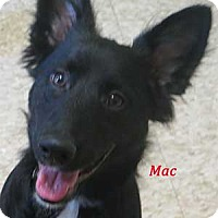 Adopt A Pet :: Mac - Warren, PA