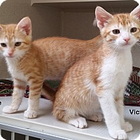 Adopt A Pet :: Vince - Portland, OR