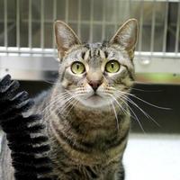 Adopt A Pet :: Keeper - St. Petersburg, FL