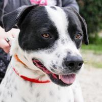 Adopt A Pet :: Peety - Hattiesburg, MS