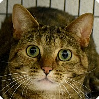Adopt A Pet :: Stella - Huntley, IL