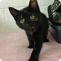 Adopt A Pet :: Delphinium - River Edge, NJ