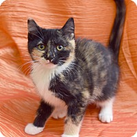 Adopt A Pet :: Cher - Chattanooga, TN