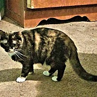 Adopt A Pet :: Baby Yelton - Princeton, NJ