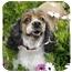 Photo 2 - Cocker Spaniel Dog for adoption in San Diego, California - Valerie