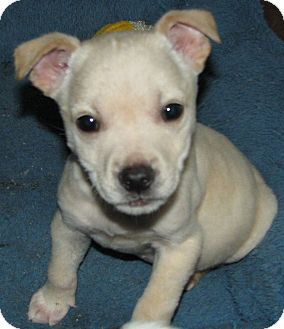 Terrier (Unknown Type, Medium)/Terrier (Unknown Type, Medium) Mix Puppy for adoption in Somers, Connecticut - Lucky: his story is incredible