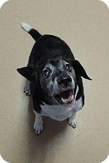Beagle Mix Dog for adoption in Brookings, South Dakota - Doc
