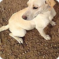 Adopt A Pet :: Lady - Childress, TX