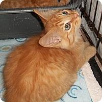 Adopt A Pet :: Humphrey - Acme, PA