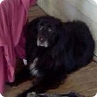 Adopt A Pet :: Dude-3 legged Senior - Dundas, VA