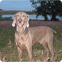 Adopt A Pet :: Raley - Eustis, FL