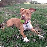 Adopt A Pet :: JoJo - richmond, VA