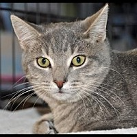 Adopt A Pet :: MOONTAIL - Alamogordo, NM