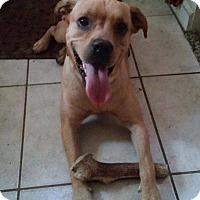 Adopt A Pet :: Hugo - Green Cove Springs, FL