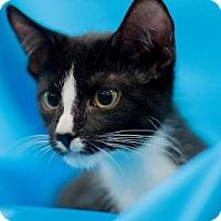 Adopt A Pet :: Rayne - Alexandria, VA