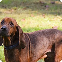 Hound (Unknown Type) Mix Dog for adoption in Arden, North Carolina - Houndie