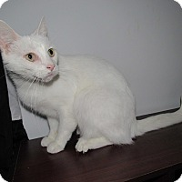 Adopt A Pet :: Fluffy - Norwich, NY