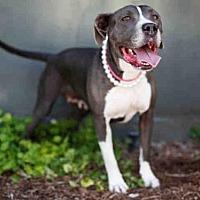 Adopt A Pet :: FLOWER - Los Angeles, CA