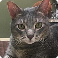 Adopt A Pet :: Nickel - St. Louis, MO