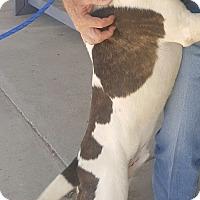 Adopt A Pet :: Beck - Odessa, TX