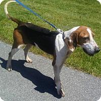 Adopt A Pet :: Iris - Lexington, MA