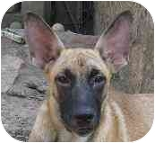 German Shepherd Dog/German Shepherd Dog Mix Puppy for adoption in Dripping Springs, Texas - Mazie