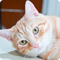 Adopt A Pet :: Hemingway - Nashville, TN