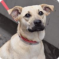 Adopt A Pet :: OSGOOD! SO Good! - New York, NY