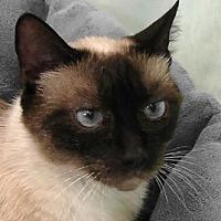 Adopt A Pet :: Lisa - Redondo Beach, CA