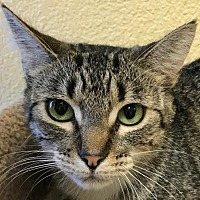 Adopt A Pet :: Pickles II - Auburn, CA