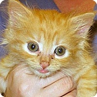 Adopt A Pet :: 356929 - Wildomar, CA