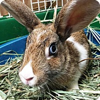 Adopt A Pet :: Chessie Marie - Edinburg, PA