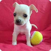 Adopt A Pet :: Fawn - Lawrenceville, GA