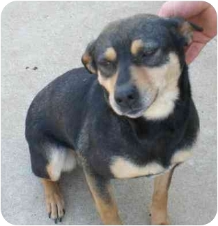 Terrier (Unknown Type, Medium) Mix Dog for adoption in Townville, South Carolina - CARLEY