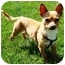 Photo 1 - Chihuahua Dog for adoption in Osseo, Minnesota - ChiChi
