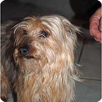 Adopt A Pet :: Sugar - cedar grove, IN