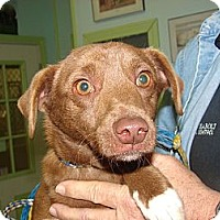 Adopt A Pet :: Tiny - Providence, RI